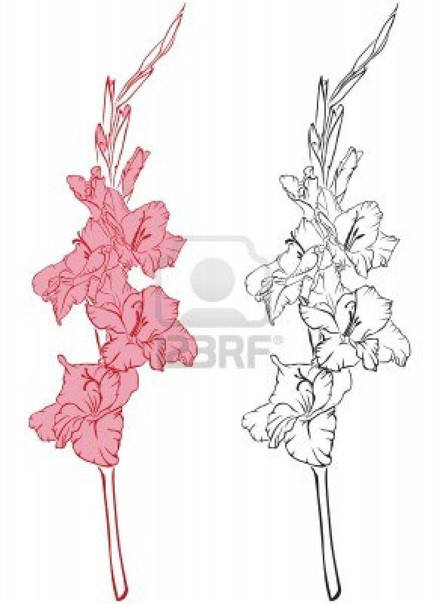 Gladiolus Gladiolus Flower Tattoos Line Art Images Flower Art