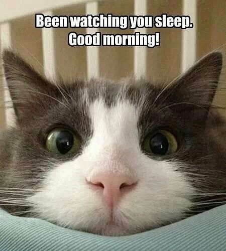 Been Watch8ng You Sleep Good Morning Cute Animal Faces Kittens Pets Cats Meow Funny Animal Jokes Funny Cats Cute Cat Gif