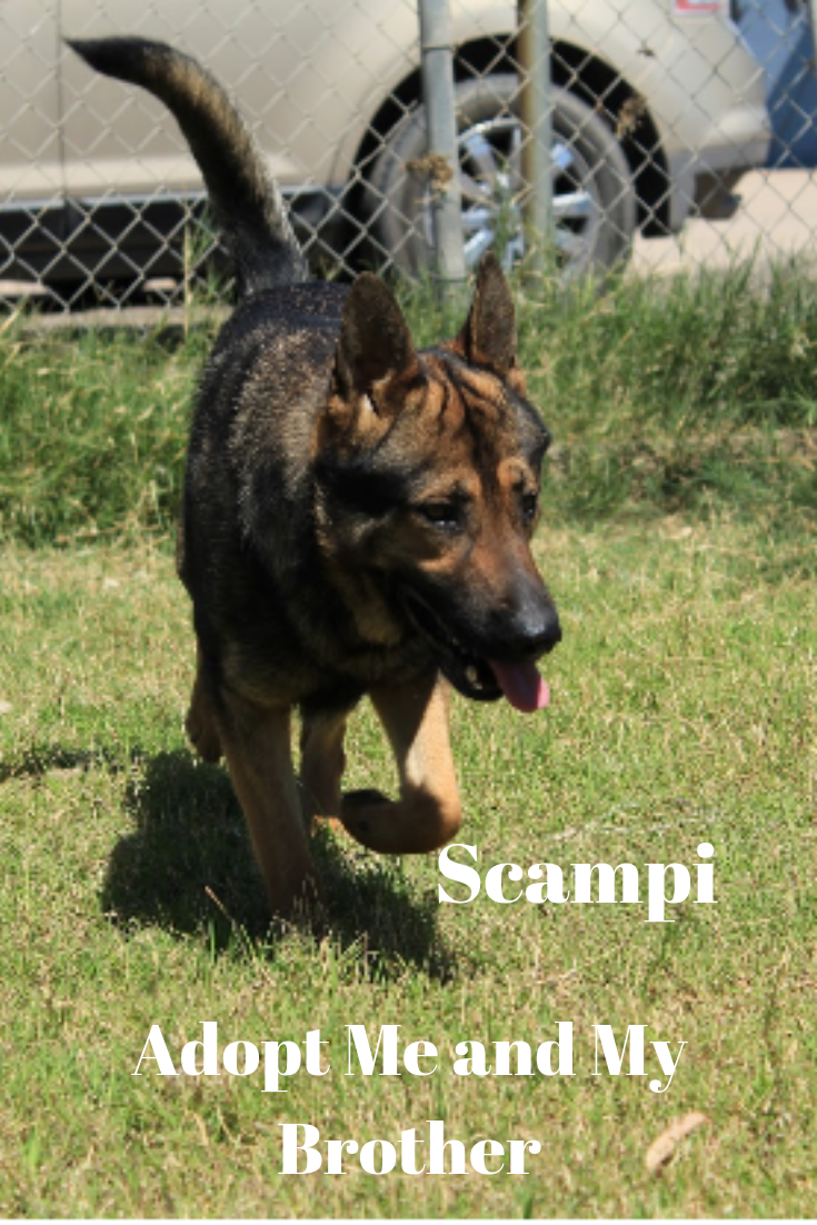 Meet Scampi Rescue Dogs For Adoption Child Friendly Dogs