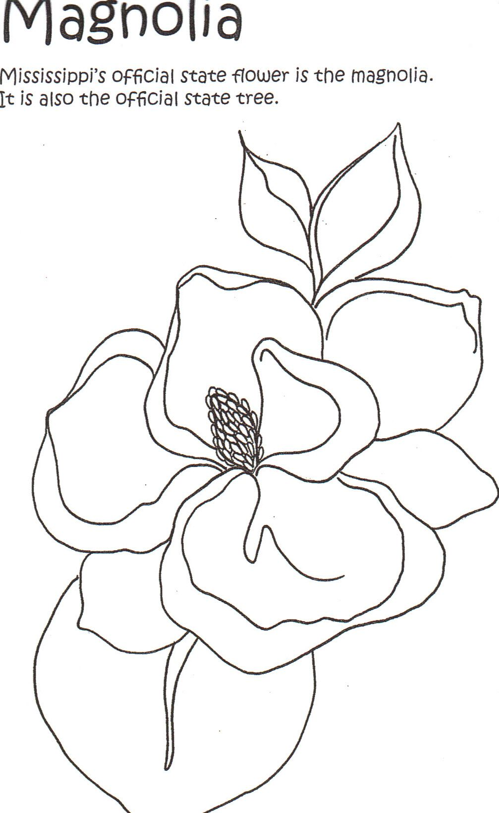 Magnolias Colouring Pages Flower Art Black White Drawing