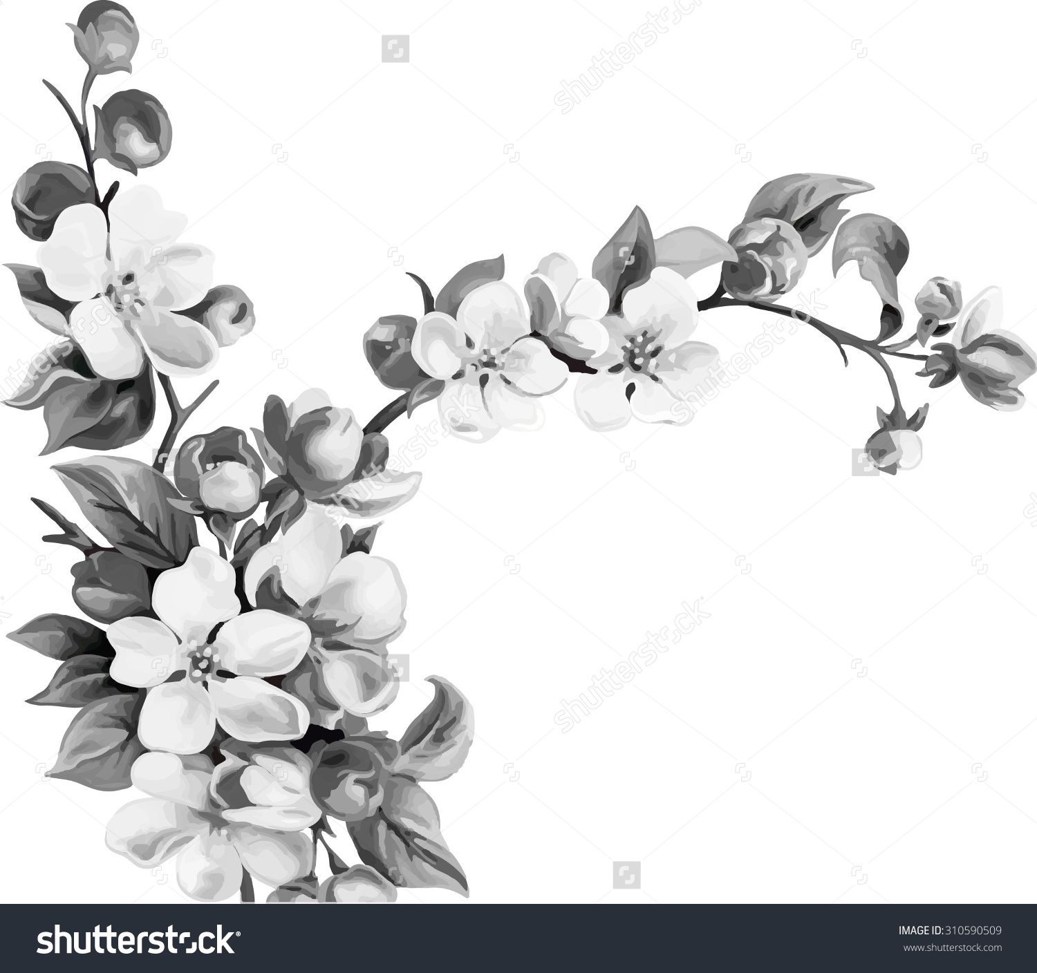 Vector Illustration Of Cherry Blossom Flowers With Leaves Tree Branch Black And White Cherry Tree Tattoos Tree Tattoo Black Cherry Blossom Flowers