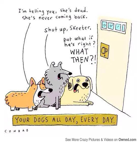Funny Dog Training Comic Google Search Your Dog Bones Funny