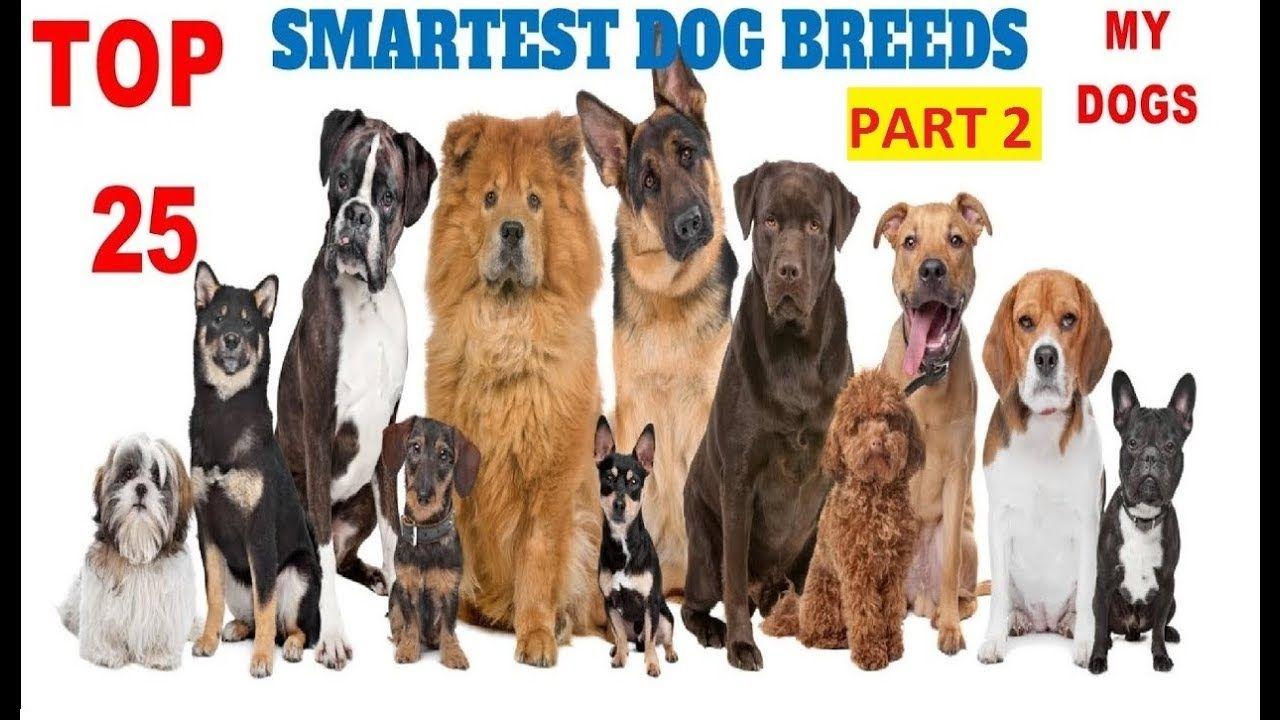 Top 25 Smartest Dog Breeds In The World (Part 2)Newest Cơm
