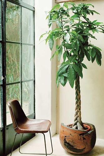 Decorar con plantas casta a de agua 1 pon un jard n en - Decoracion plantas interior ...