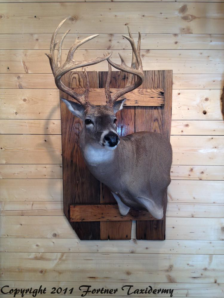 Fortner Taxidermy In 2019 Deer Mounts Taxidermy Decor