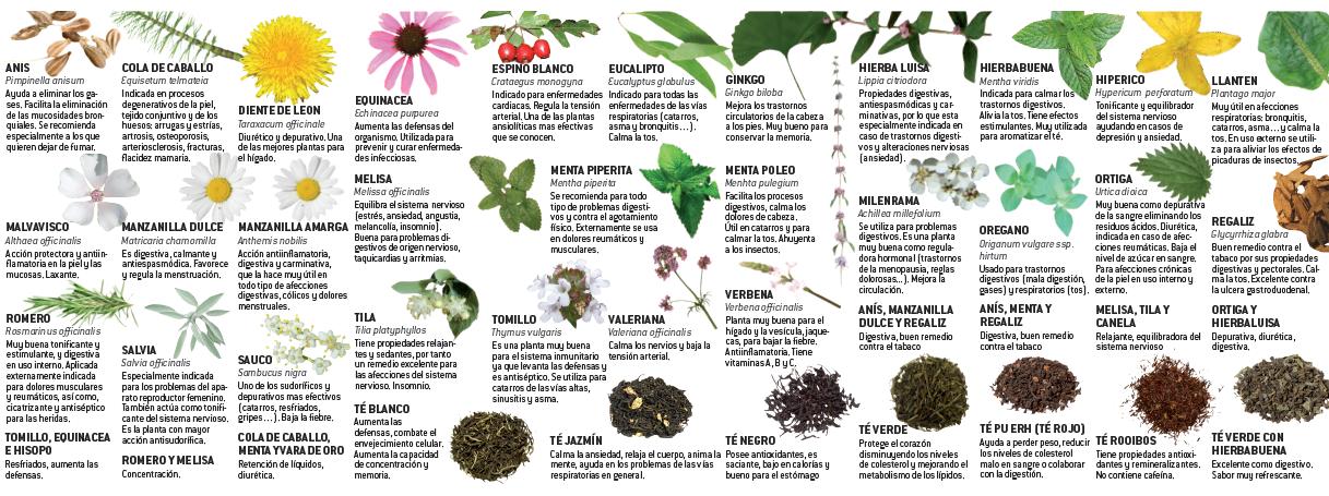 Algunas de nuestras m s de 50 variedades de plantas con for Planta decorativa con propiedades medicinales