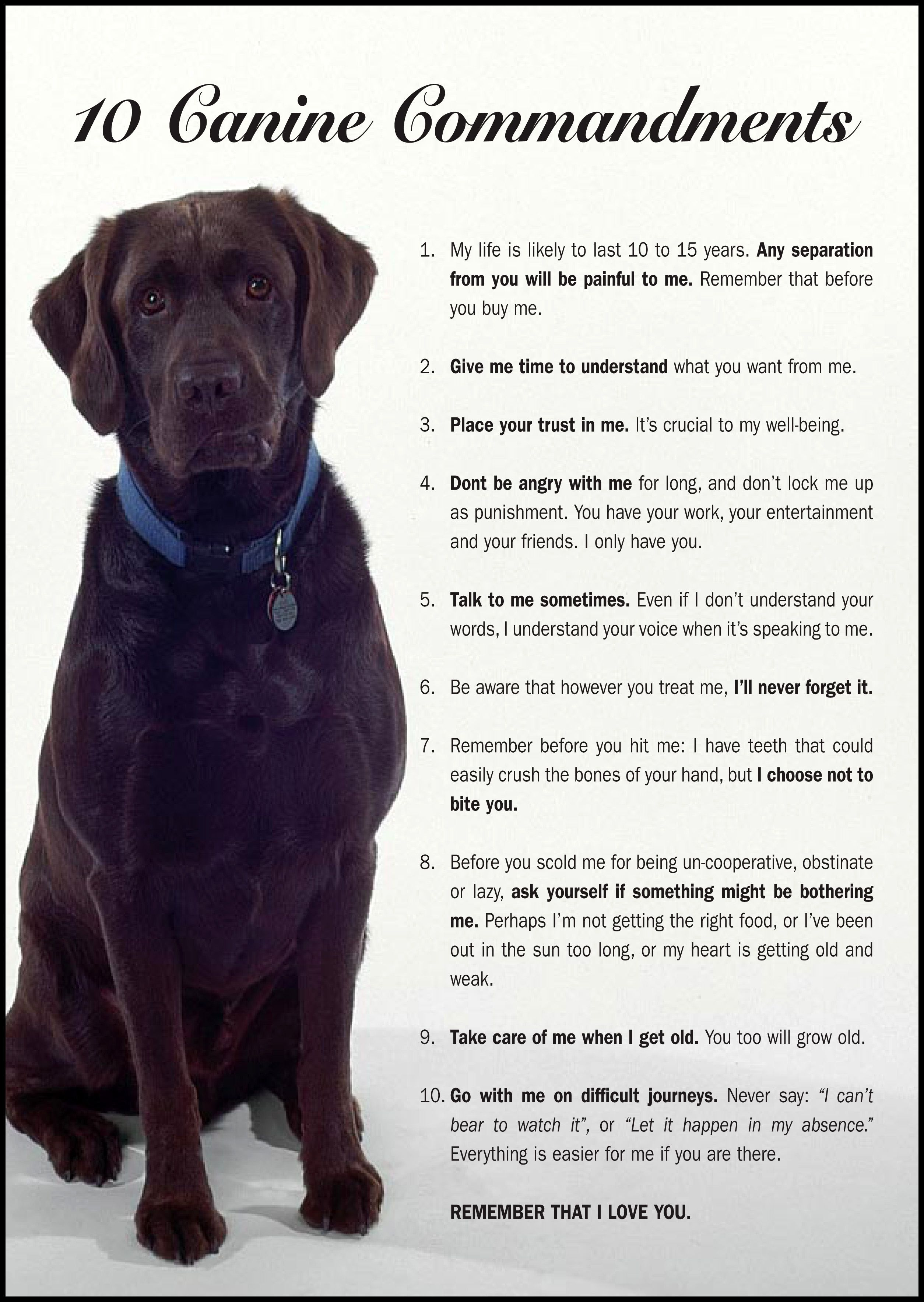 10 Canine Commandments Dog Love Baby Dogs Dogs