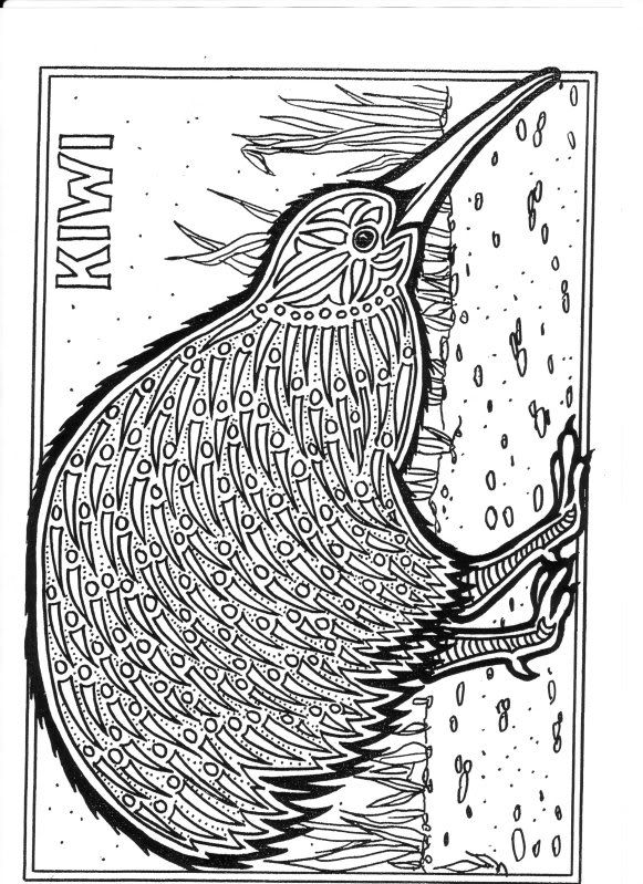 Kiwi photo by photogfrog author louisa eddleston for Kiwi bird coloring page