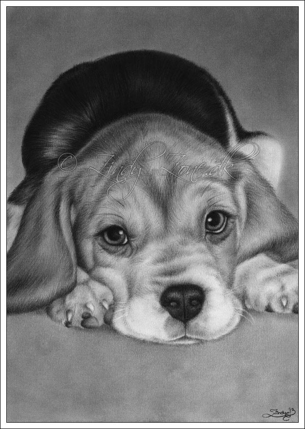 Cute For You Puppy By Zindy Deviantart Com On Deviantart With
