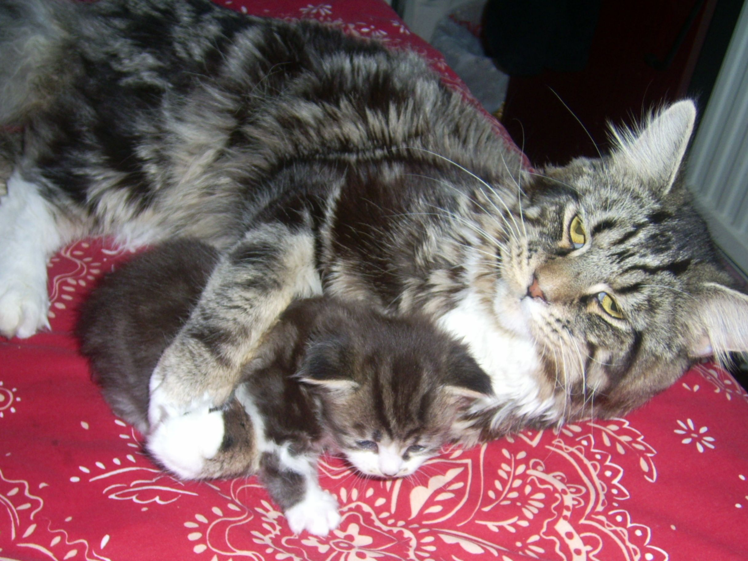 Mummy wants cuddle