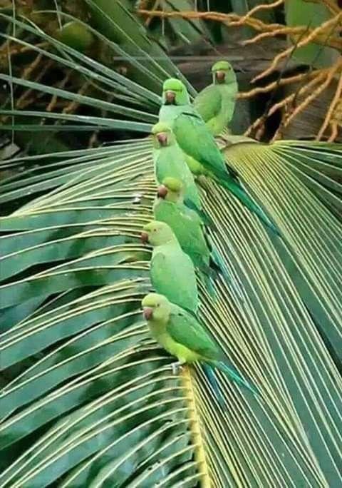 Pin by Not a business on Bird board   Pet birds, Birds