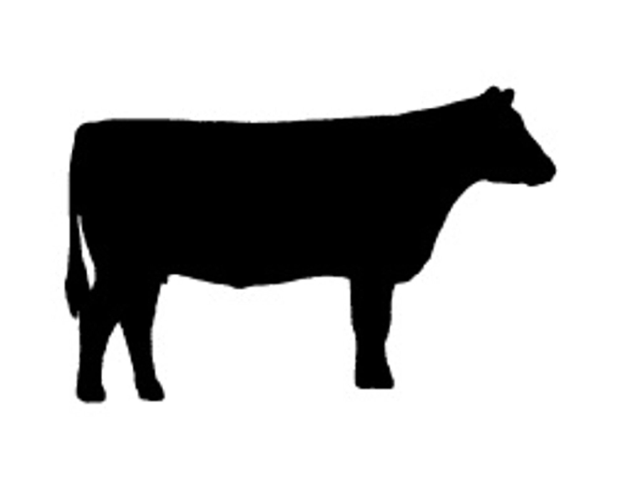 buncombe county 4 h kiwanis calf chain clip art cow and silhouettes rh pinterest com au cow clip art free images cow clip art black and white