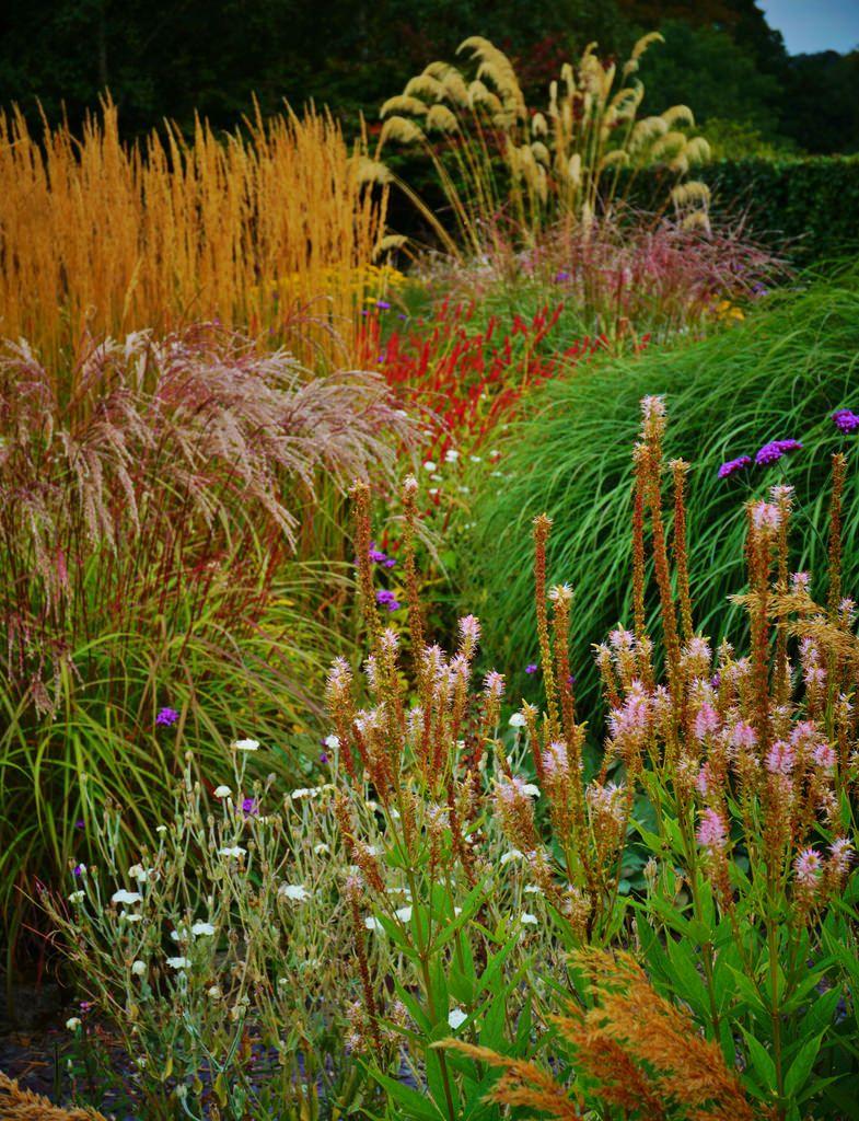 https://flic.kr/p/AywgjS | Meadow garden | My Beauty Garden ...