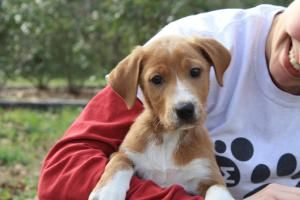 Adopt La Zaury On Animals Pet Taxi Puppies