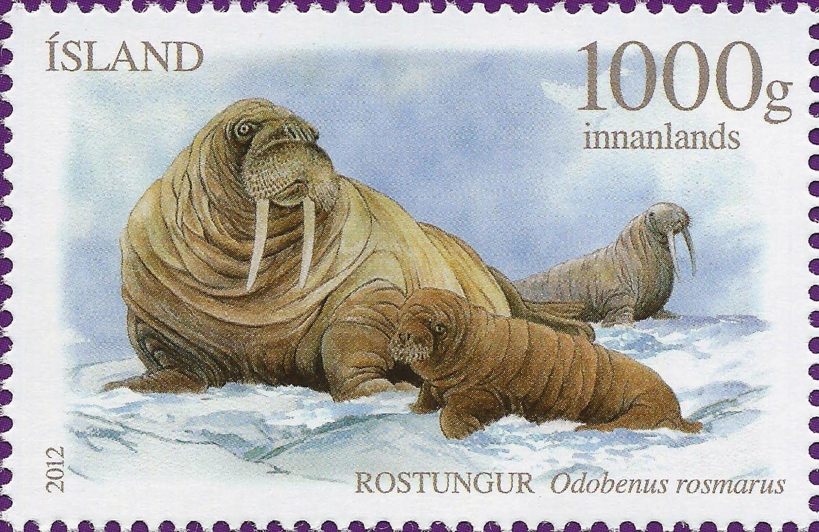 2012+Odobenus+rosmarus.jpg (1600×1039)