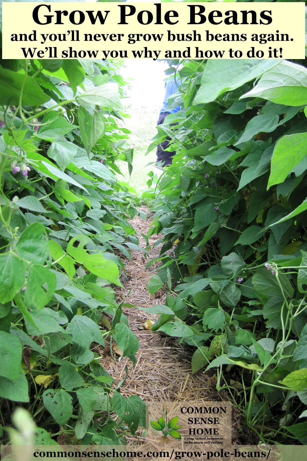 Grow Pole Beans On A Trellis For Easy Picking And Preserving Bean Trellis Pole Bean Trellis Growing Green Beans