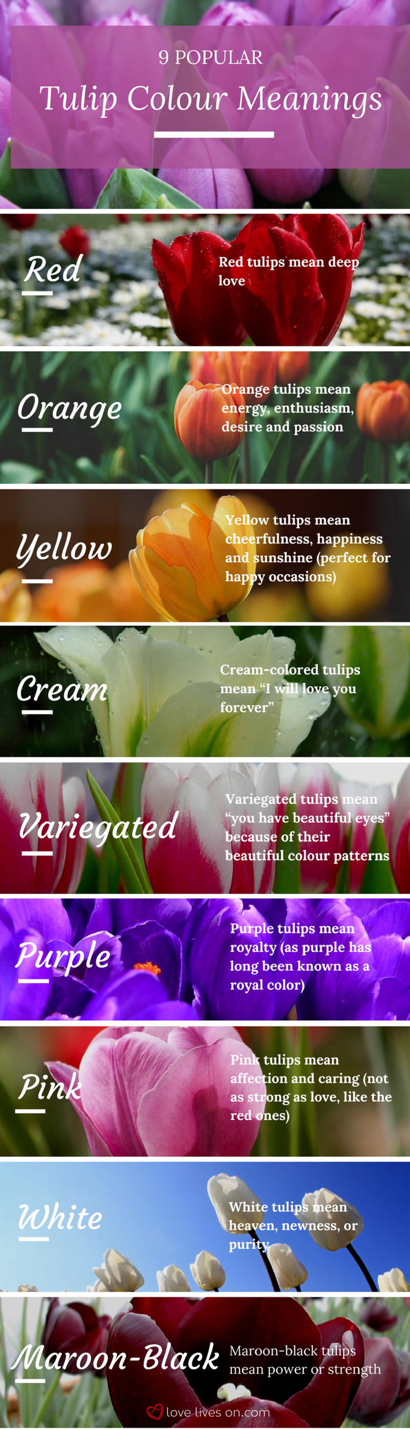 10 best funeral flowers tulip colors funeral arrangements and infographic 9 popular tulip colour meanings learn tulip colour meanings so you can create geenschuldenfo Gallery