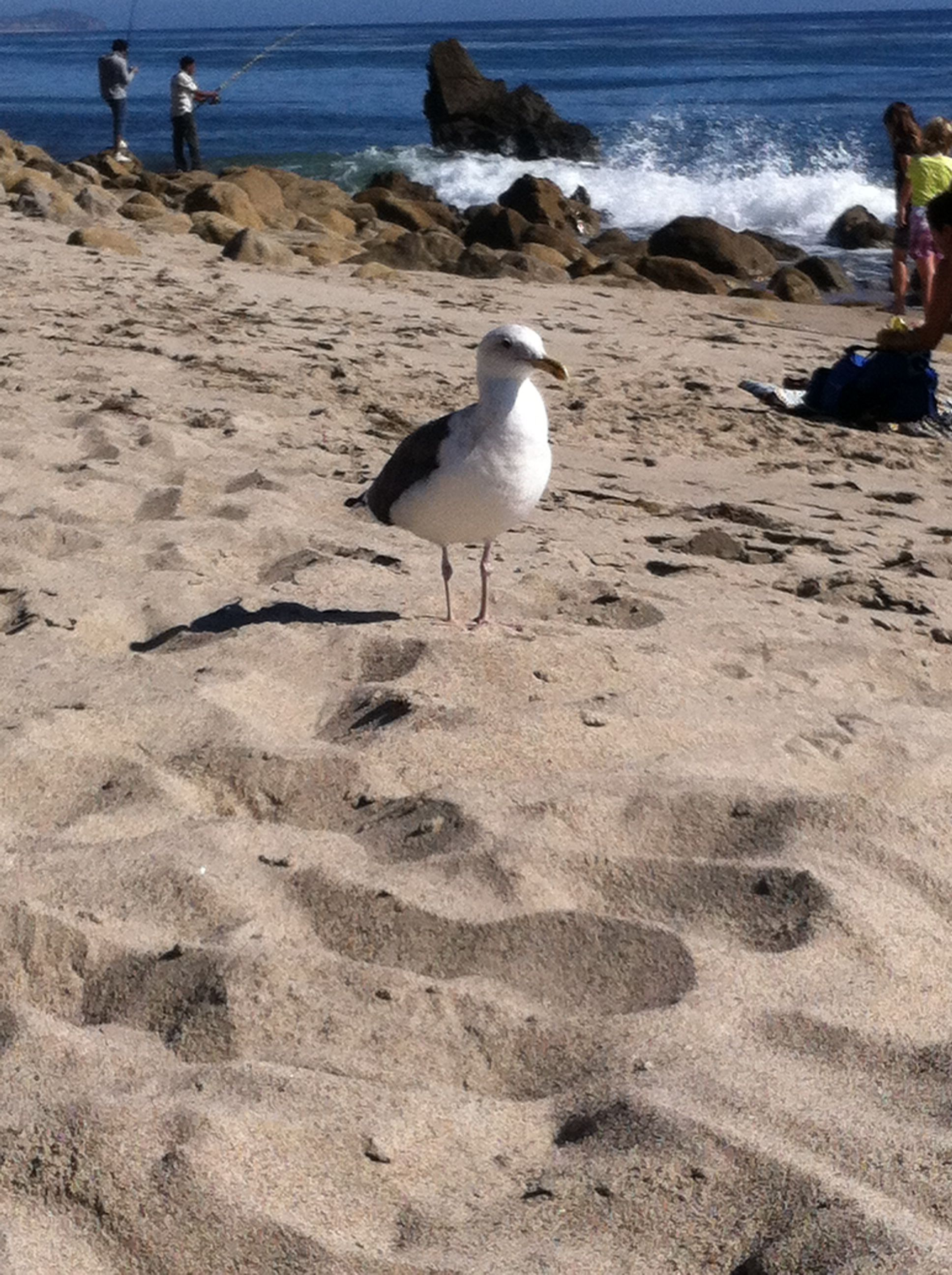 Seagull waiting for a snack
