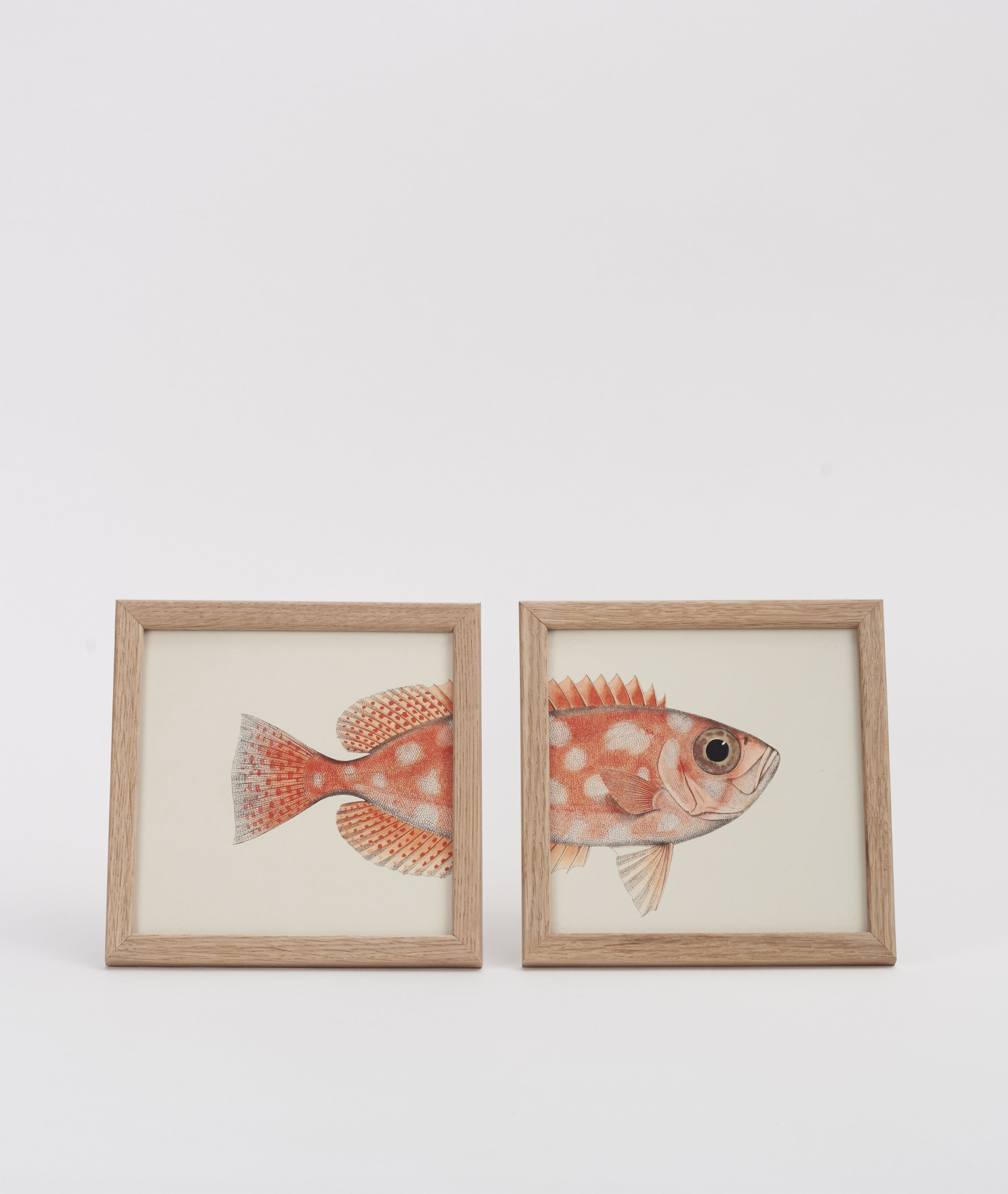 Set of Two Orange Fish Prints: This print is made by designer andheritage adventurerHenrik Dybdahl.Henrik browses through hundreds of amazing collections at libraries, museums and archives around the world. When he uncovers interesting images he enhances and restores them to their former glory. This productfeatures two separate frames, one print displaying the back of the orange fish and the other the front. The prints can be hung or stood on a table. - Frames included -Original edited…
