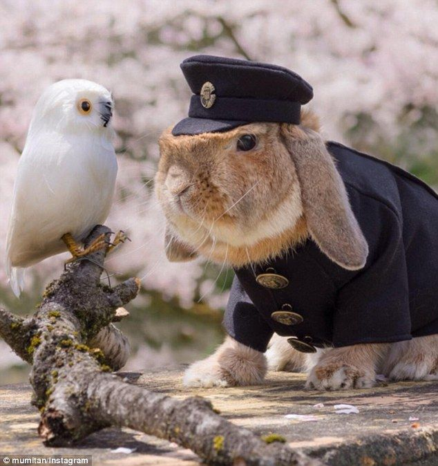 New friend:The chic rabbit is often snapped living it up in very intricate outfits and costumes thanks to his proud owner Mumitan