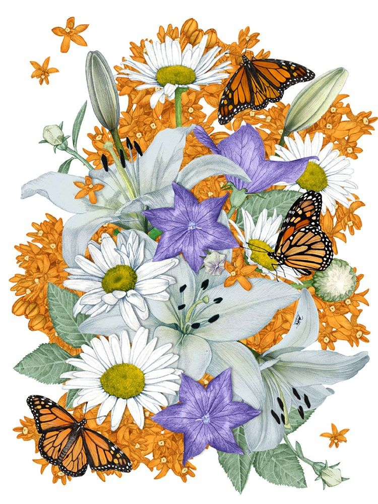 Butterfly Art Flower Daisy Daisies Print or Giclee Floral