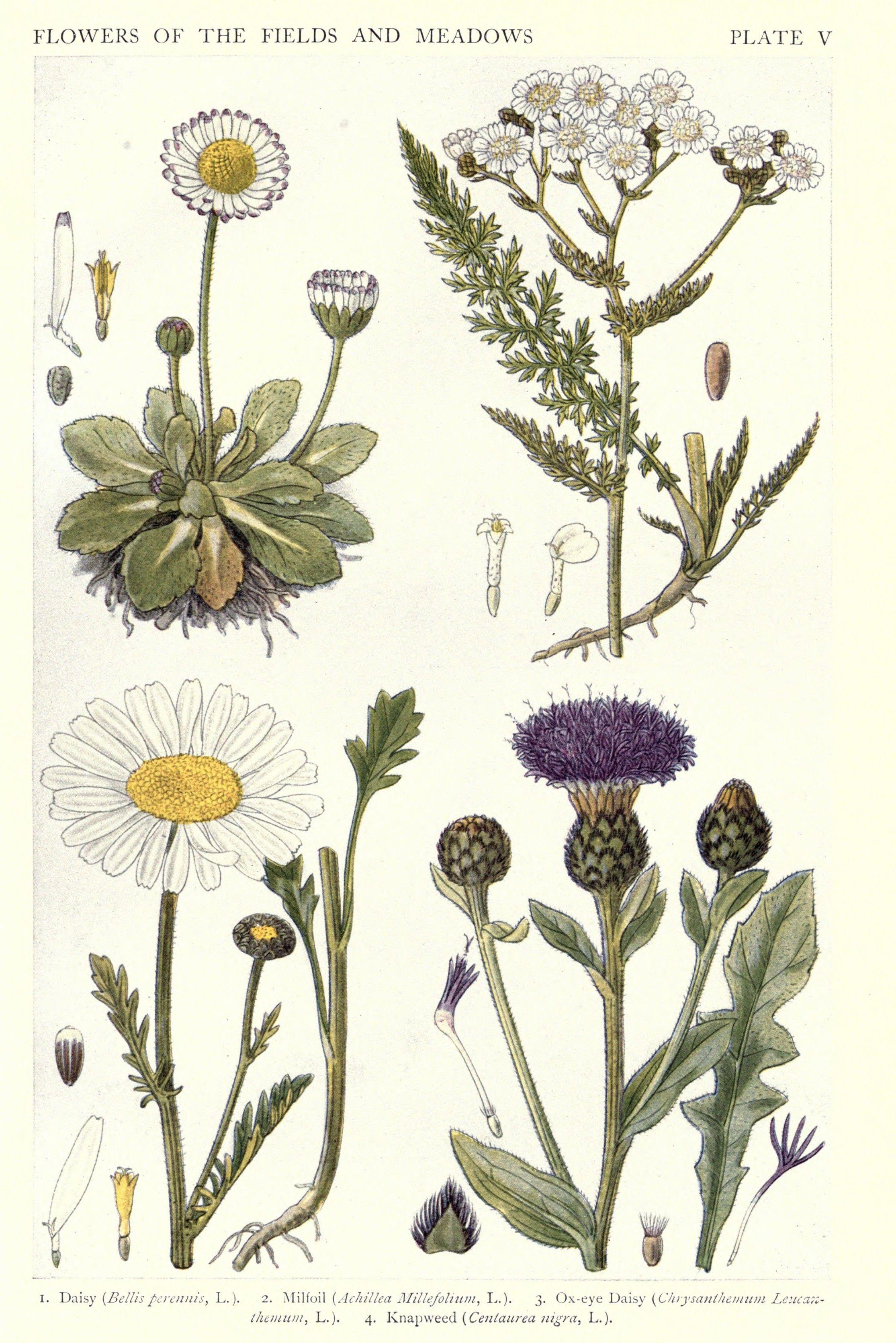 new british herbal 1919 decorations pinterest plates and british
