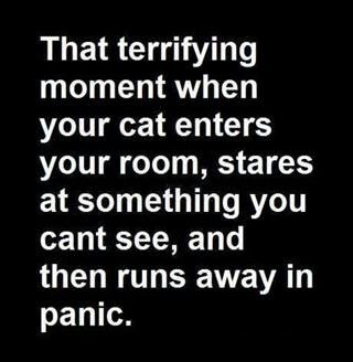 My kitty does this all the time!