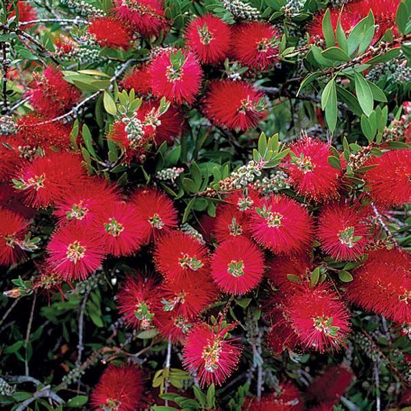 Xeriscape Texas Native Plants For Drought Tolerant