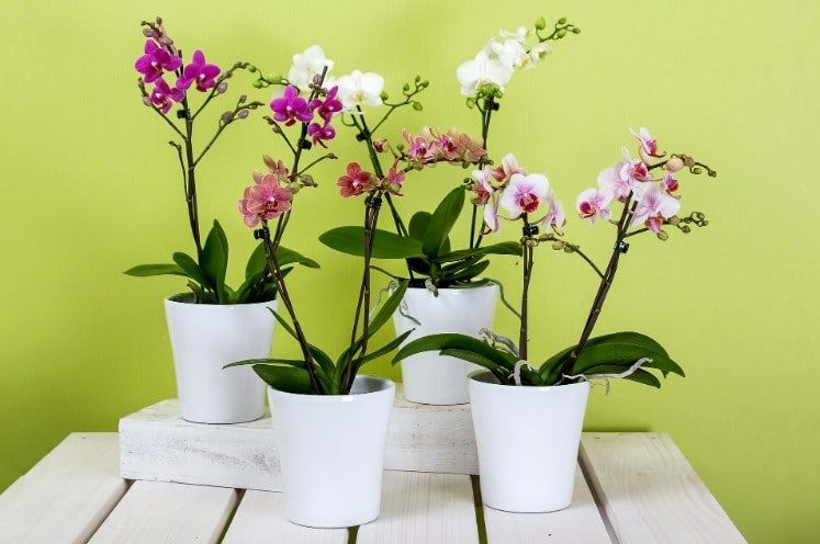 8 Best Fertilizer For Orchids 2020 Reviews Guide In 2020 With Images Phalaenopsis Orchid Care Repotting Orchids Orchid Plants