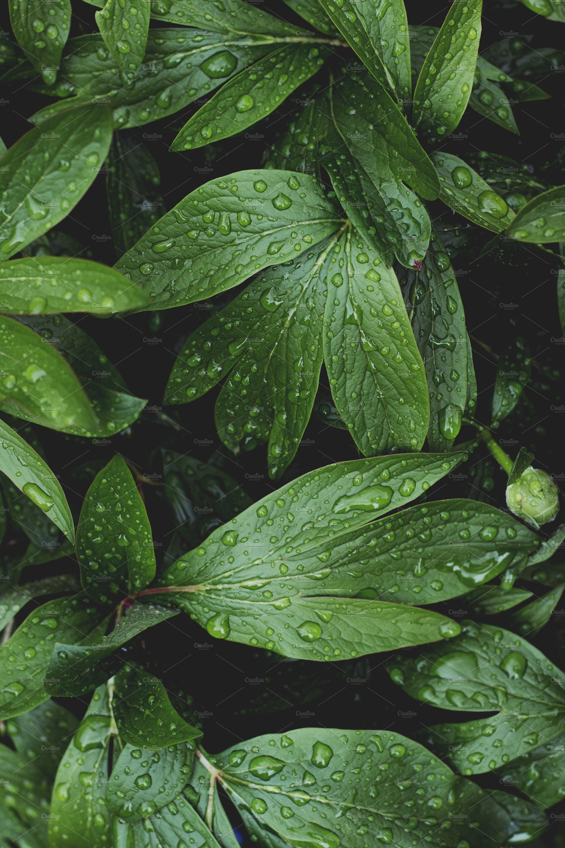 Lush Greenery With Raindrops Leaf Photography Green Aesthetic Plant Photography