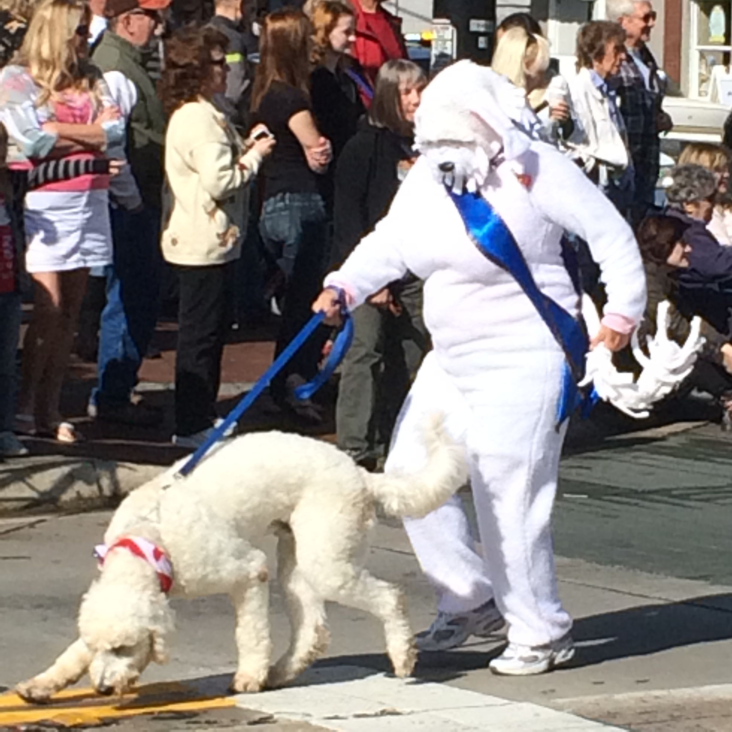 The Best Costume Leads The Parade Dog Costumes Cool Costumes