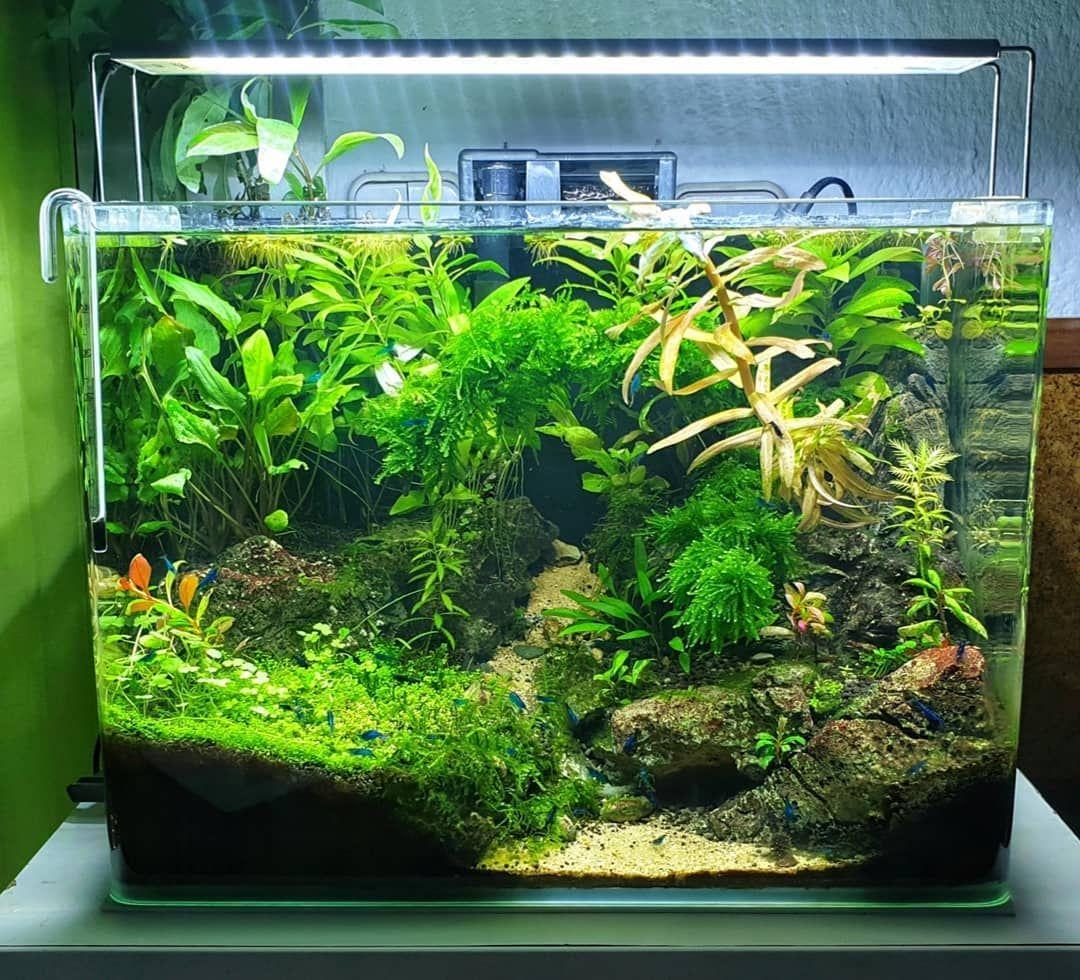 Shrimp Tank In 2020 Shrimp Tank Betta Fish Tank Cherry Shrimp
