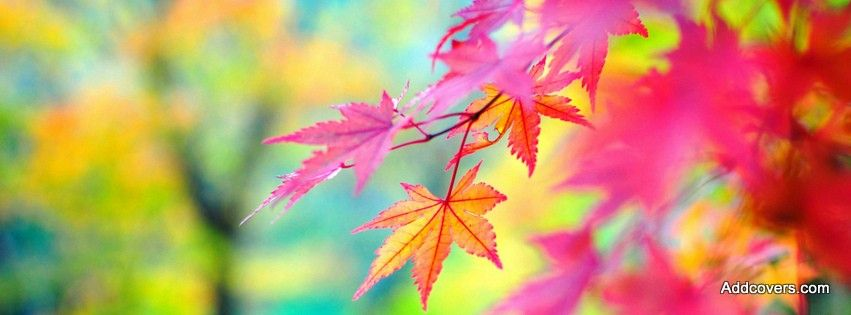 Scenic Nature Facebook Covers For Timeline Autumn Leaves Wallpaper Autumn Leaves Background Fall Wallpaper
