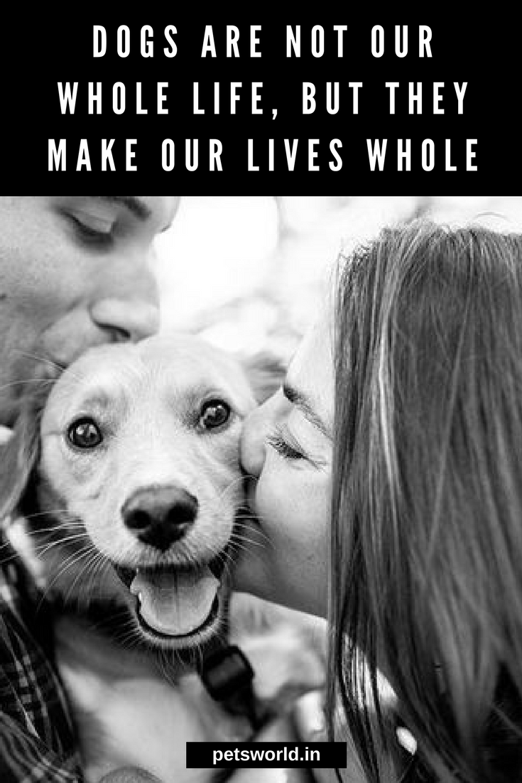 True That Dogs Are Not Our Whole Life But They Make Our Lives Whole 3 Dogsarelove Petsworld Dogs Dogsofinstagram Dog Dog Pretty Dogs Pets Dog Quotes