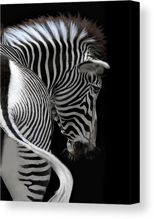african stripes II Canvas Print / Canvas Art by Joachim G Pinkawa