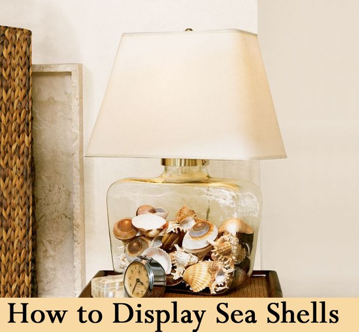 Pottery Barn Atrium Lamp: Sea Shells, Beaches And The Top