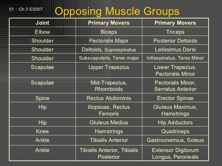 muscle groups diagram google search personal training