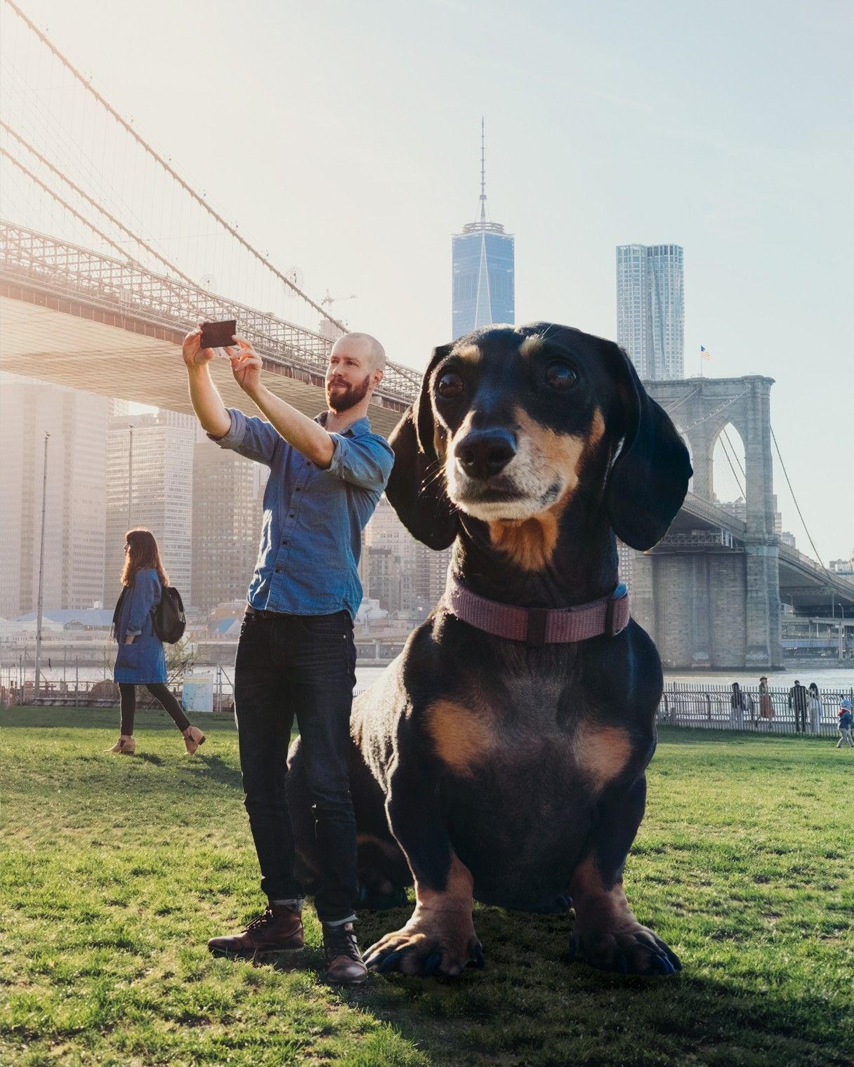 Vivian The Giant Dachshund Moves To Nyc And Helps Kids In The