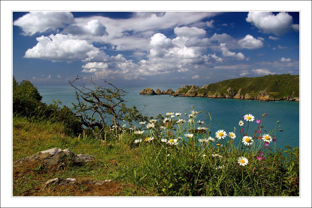 ромашки над океаном фото хасанов профессионал, прекрасно