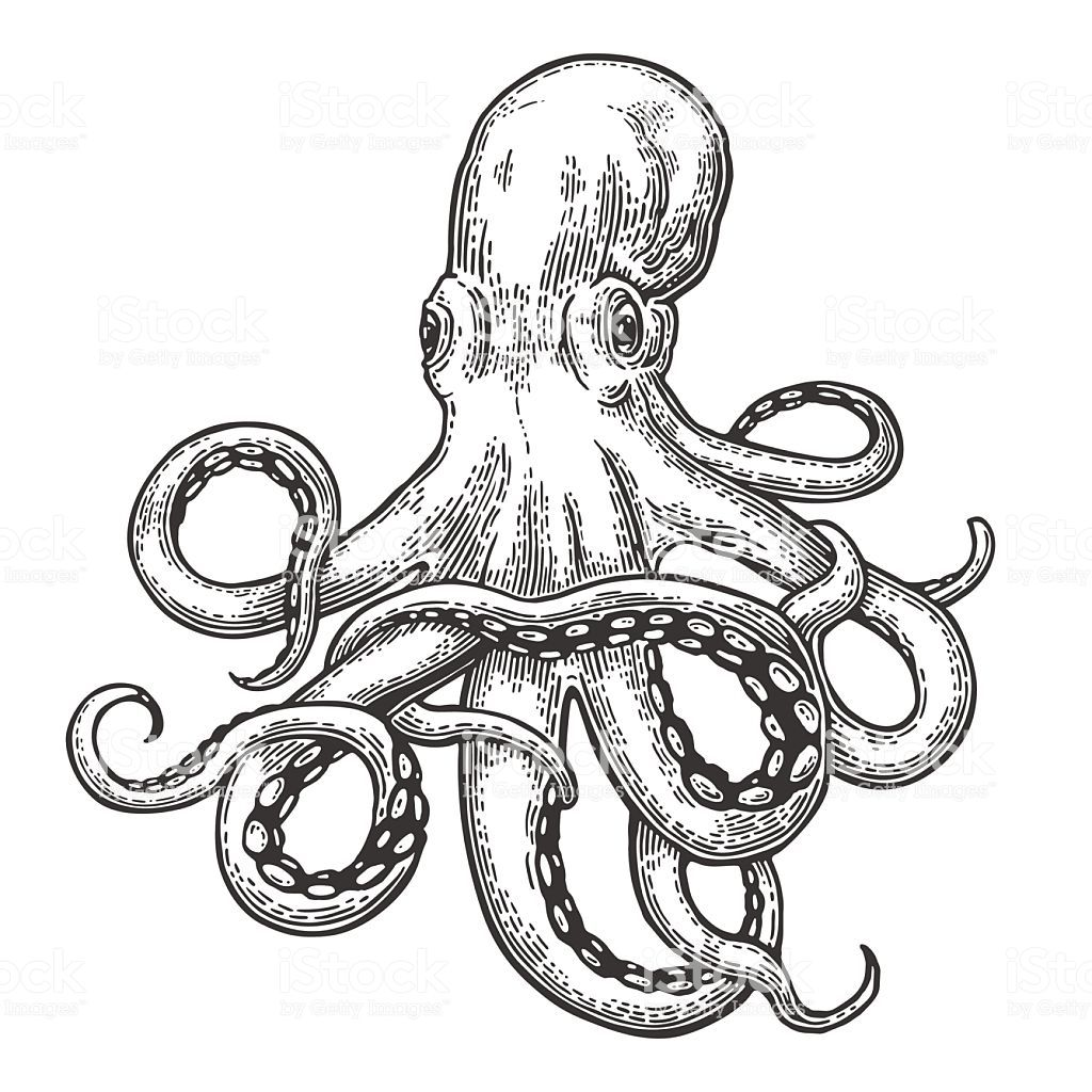 Octopus. Vector black engraving vintage illustrations