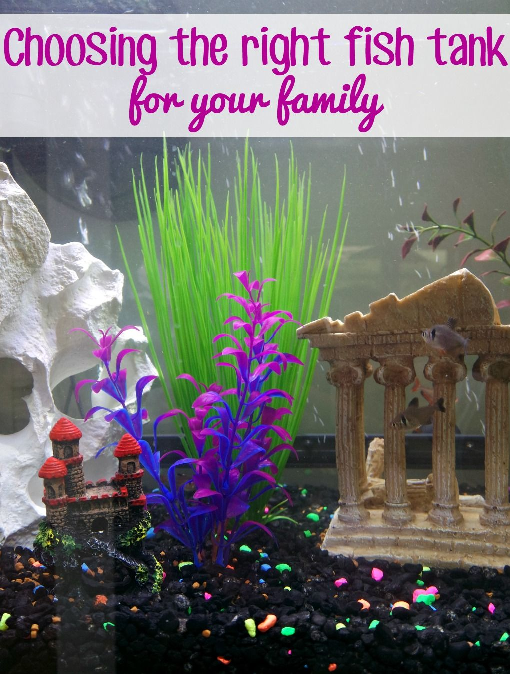 Choosing the right fish tank for your family Fish tank