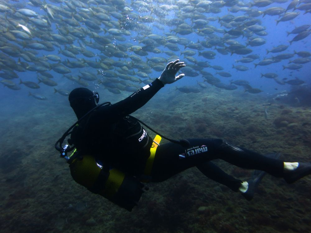 This Fish Gave The World's Best Side Eye To A Scuba Diver ...  |Scuba South France