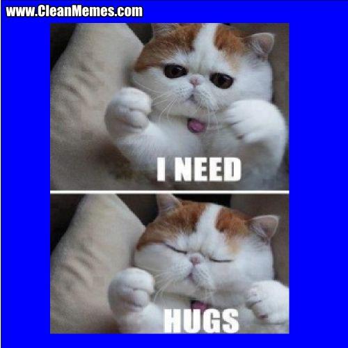 e592ae7b32cb7aa9fe2be70046f9eb1d clean funny cat memes cat lovers pinterest cat lovers, funny