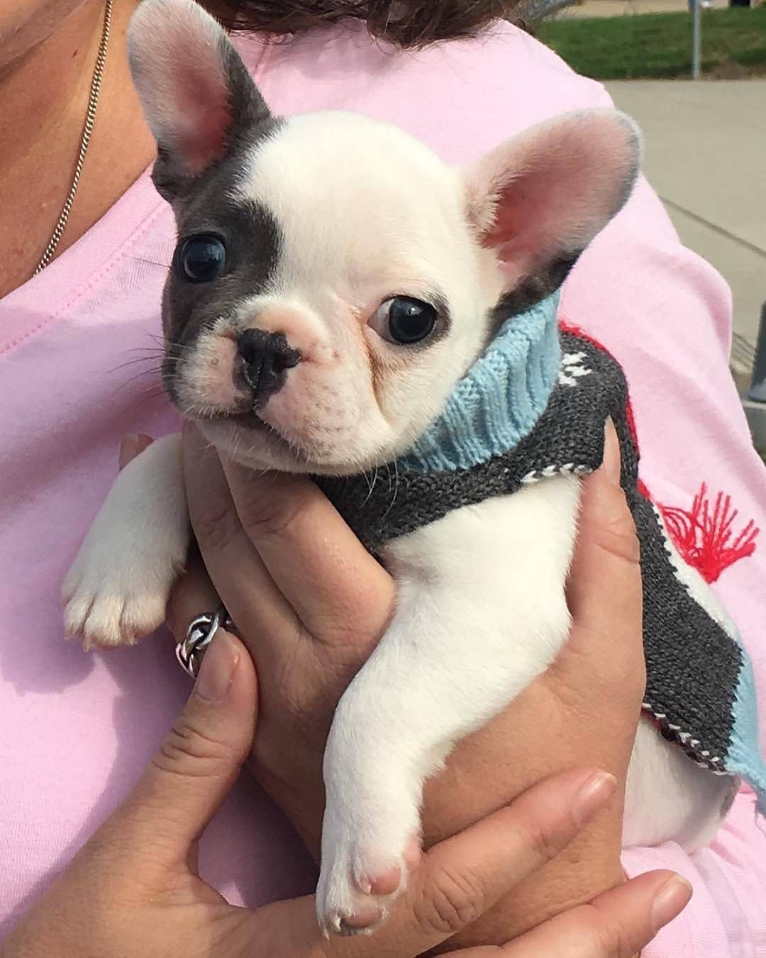 I just want to drink wine and pet my frenchie