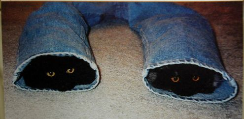 this is what happens when you leave your pants unattended.
