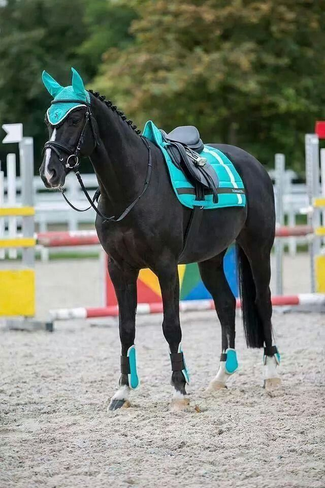 I love the matching saddle pad, fly Bonner, and boots ...