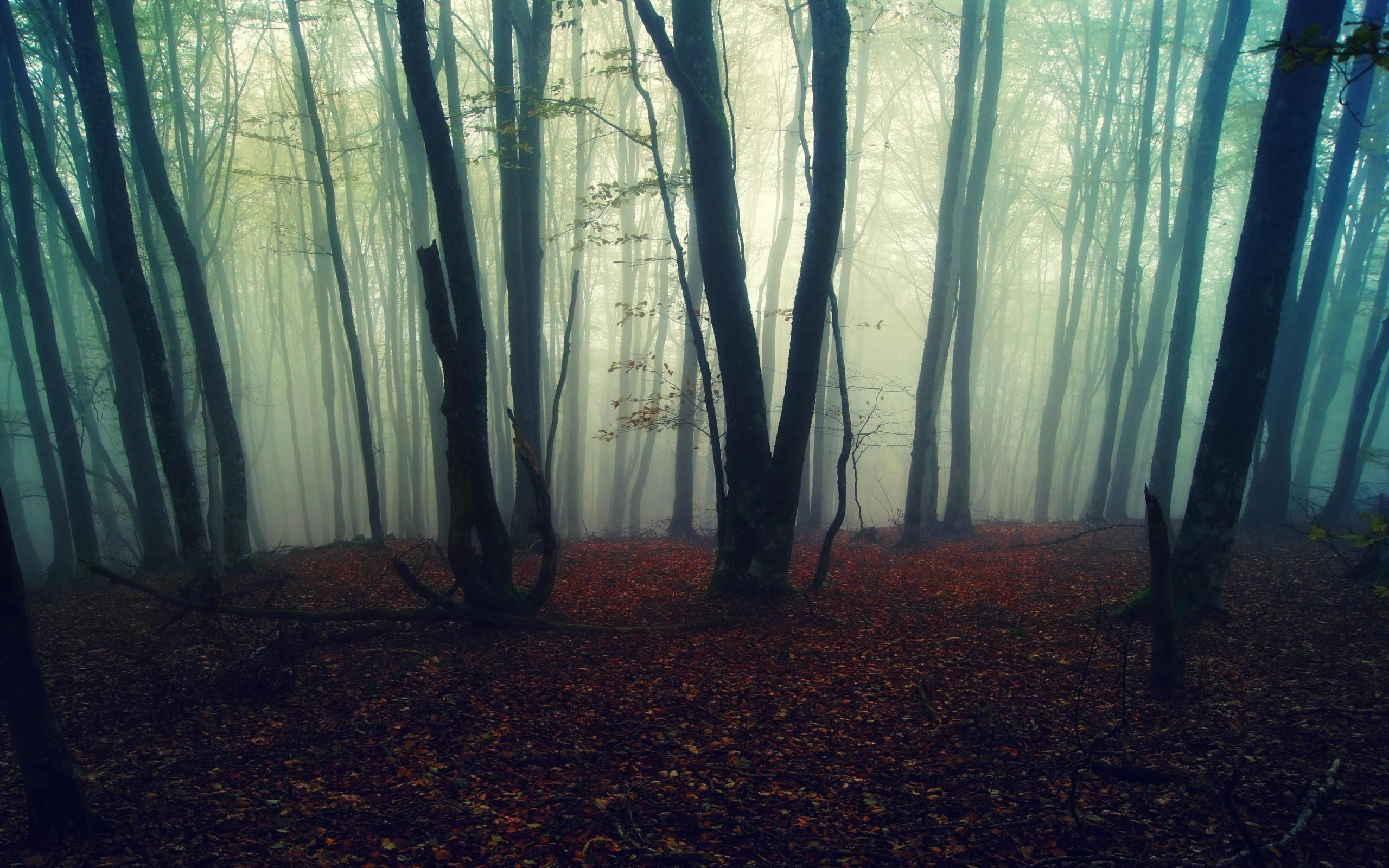 aesthetic foggy forest background