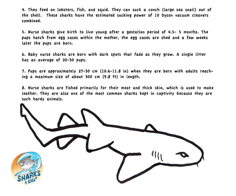 Pin von Sharks4Kids, Inc. auf Shark Education Activities | Pinterest