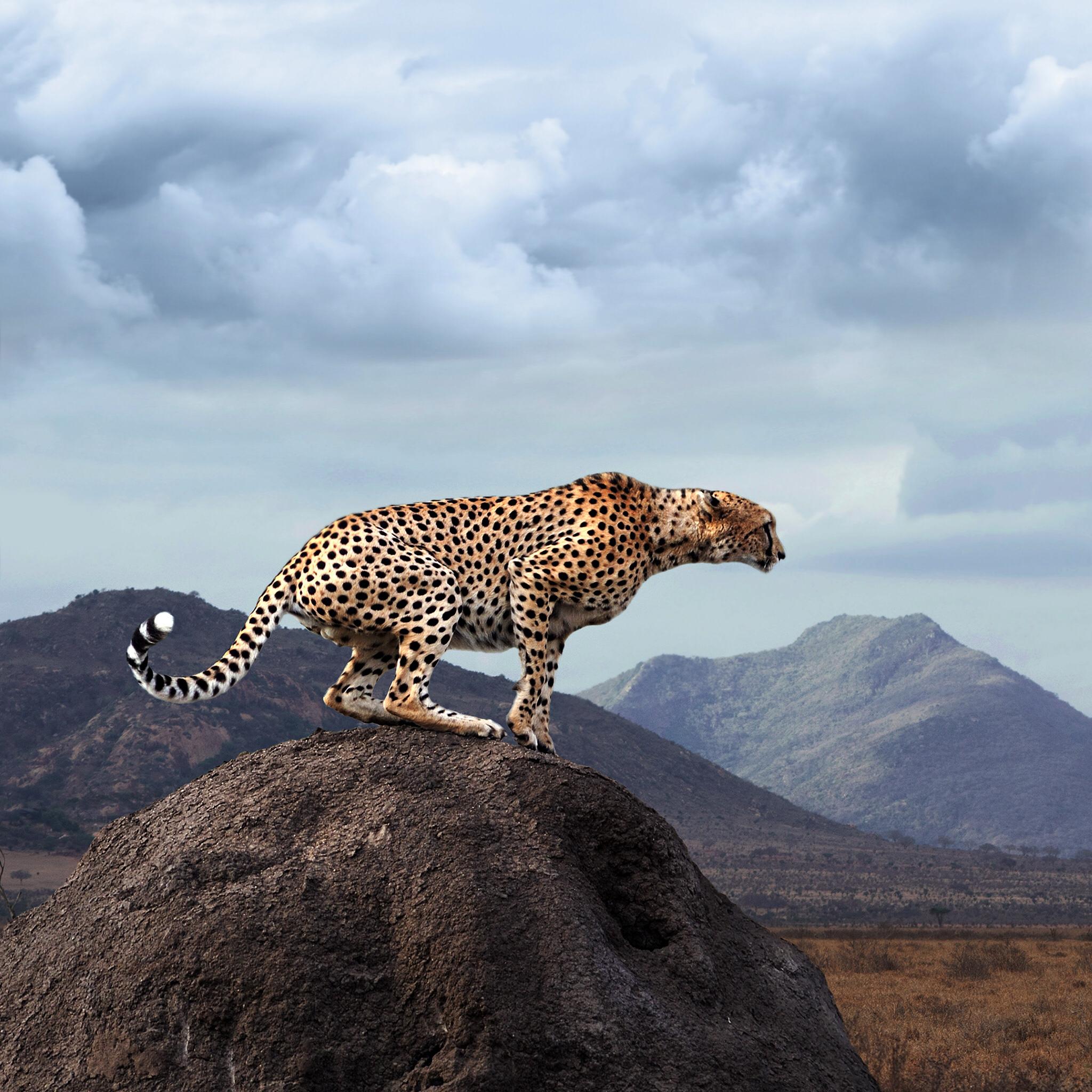 Pin by SidneyBarjon on Animaux African wildlife, Animals