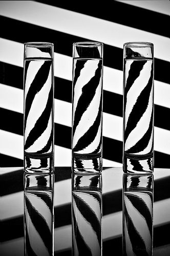 Zebra Water Splash